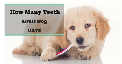 how many teeth do puppies how many teeth does an how to take care