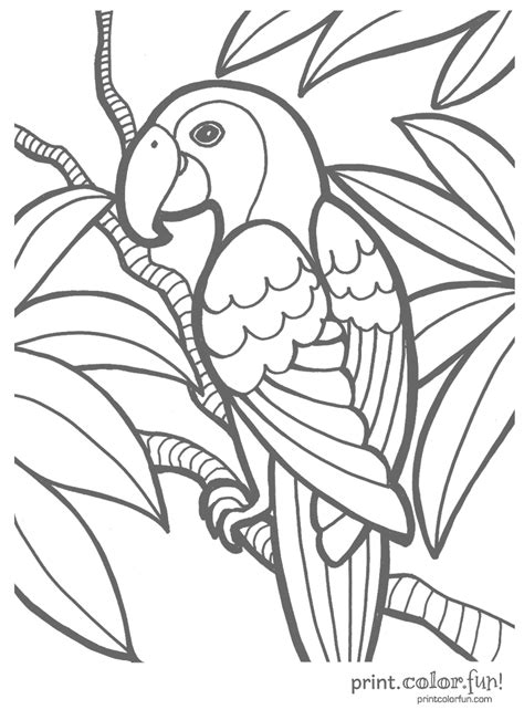 free tropical bird coloring pages