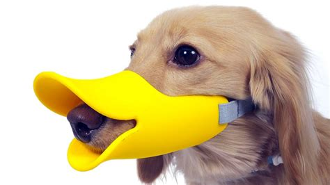 pet gadgets 5 amazing pet gadgets you must have 6 youtube
