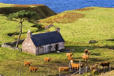 highland cottage with highland cattle photograph by john