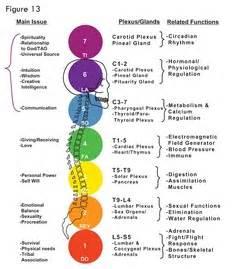chakra colors test kinesiology testing chakra healingwithcrystals net au