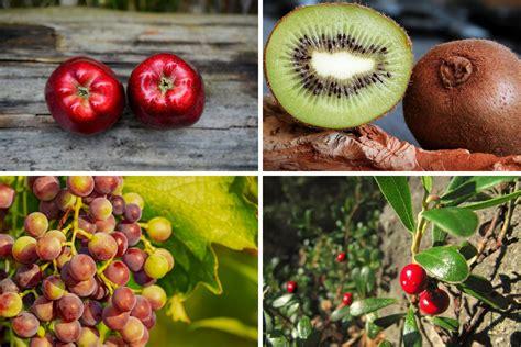 elenco alimenti vegani frutti autunnali elenco propriet 224 e ricette le ricette