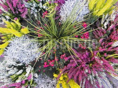 kostenloses foto winterharte bepflanzung pixelio de - Winterharte Bepflanzung