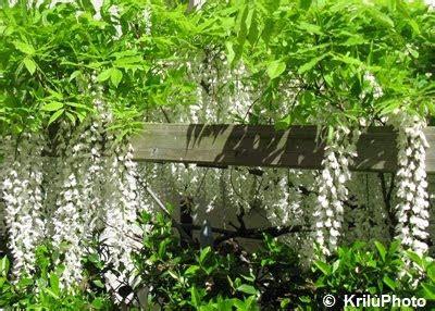 pianta ornamentale dai fiori penduli nel mondo di krilu se avessi un giardino