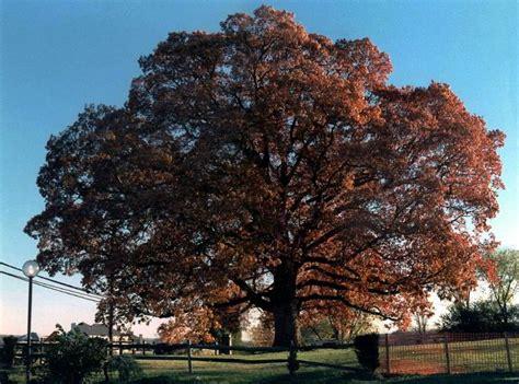 trees maryland trees to maryland myideasbedroom