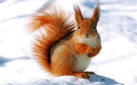 wallpaper for desktop of animals 9619 winter animal widescreen desktop wallpaper walops com