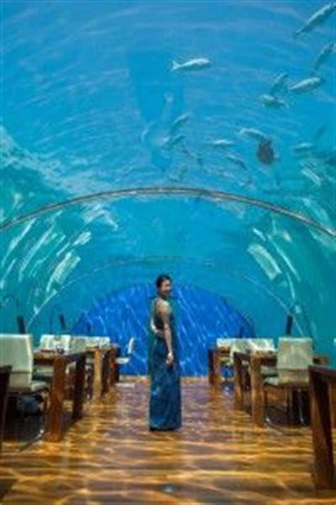 maldives ringali island conrad underwater restaurant part 1000 images about all about conrad maldives rangali