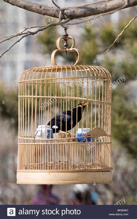 Bird Cage Stock Images Image 24110704 Bird Cage Stock Photos Bird Cage Stock Images Alamy