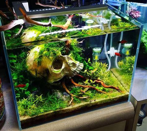 model aquarium ikan hias minimalis terbaru