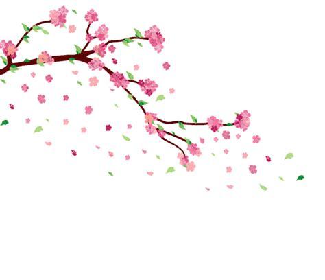cherry blossom transparent gif  gif images
