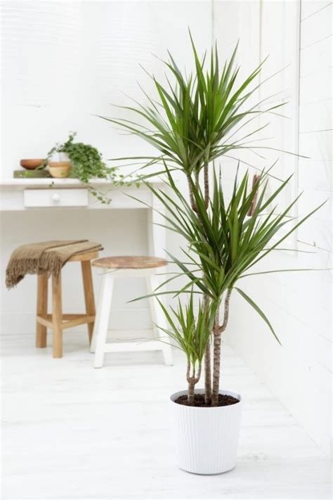indoor house tree 32 beautiful indoor house plants that are also easy to