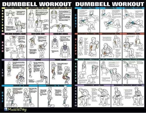 46 best dumbbells exercise images on workout