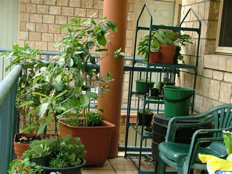 container gardening for food apartment food container gardening getting started