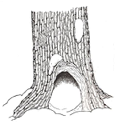 tree stump coloring page the mitten coloring pages by jan brett new calendar