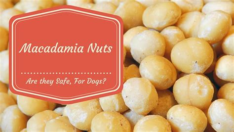 are walnuts for dogs can my macadamia nuts smart owners