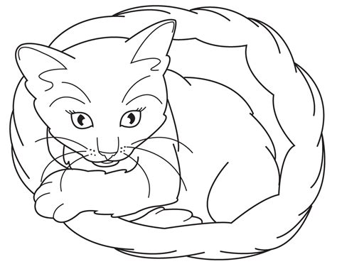 coloring pages of realistic cats realistic coloring pages of animals coloring home