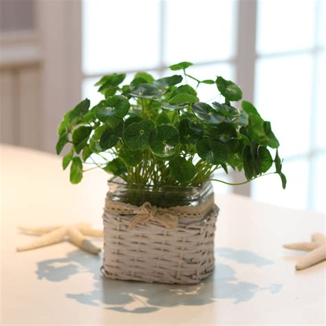 small house plants rustic small lotus leaf green artificial plant small fresh