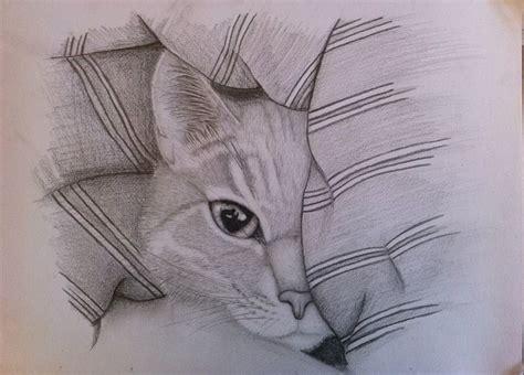 bettdecke zeichnung bild katze tier bleistiftzeichnung auge marit bei