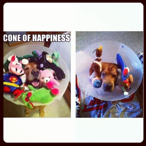 Cone Of Shame L by 17 Best Images About F A I L On Bottle