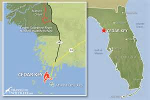 cedar key florida map why cedar key is our favorite place to kayak with dolphins