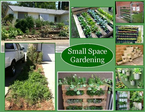 small space gardening 301 moved permanently