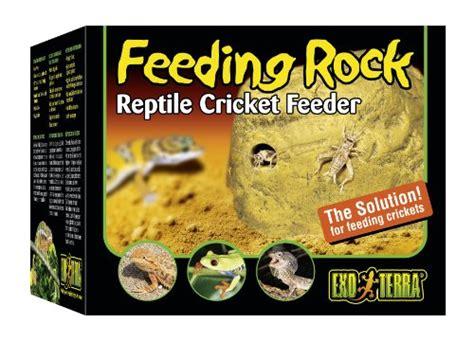 mealworm feeder  reptile november  top