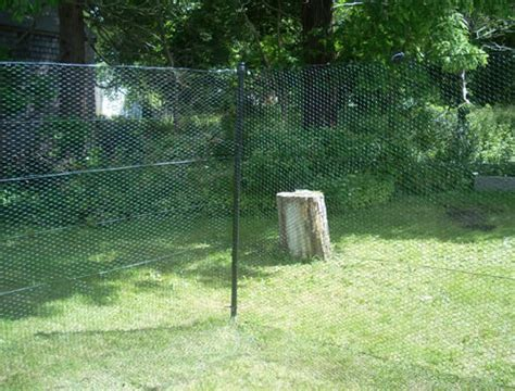 best invisible fence buy invisible fence u behavior