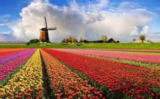 Flowers Of Netherlands - top 15 flower fields in the world world top top
