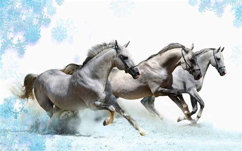 wallpaper for desktop running horse white horses running hd desktop wallpapers 4k hd