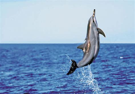 Paket Snorkling Orca 2016 Lifejacket Atunas lanai dolphin snorkel cruise pacific whale foundation