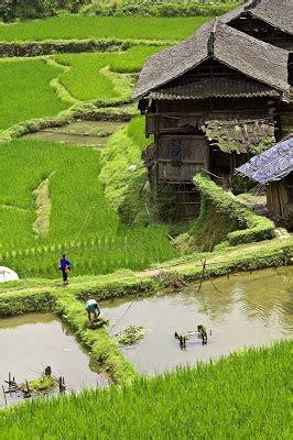 mina padi kolam sawah