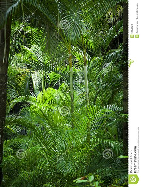 Plants In The Tropical Rain Forest - lush green jungle background stock photo image 63125824