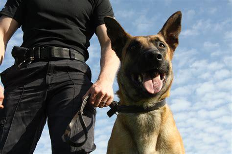 police dog june 2011 positive police dogs