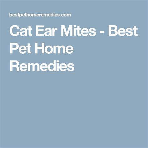 best 25 cat ear mites ideas only on ear