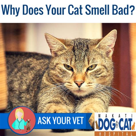 why does a your why does your cat smell bad
