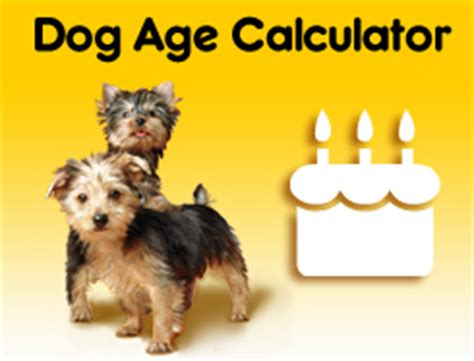 age calculator by breed breeds list information for all breeds pedigree