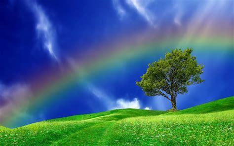 rainbow  tree  field hd wallpaper background image