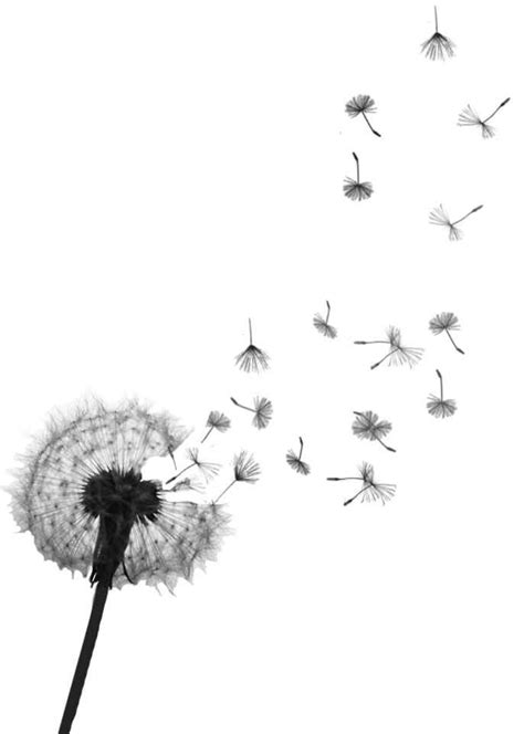 dandelion seed tattoo dandelions dandelion tattoos and tattoos and on