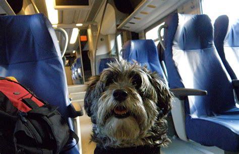 Cani In Cabina Aereo by Viaggiare In Aereo Con Il Viaggi E Vacanze