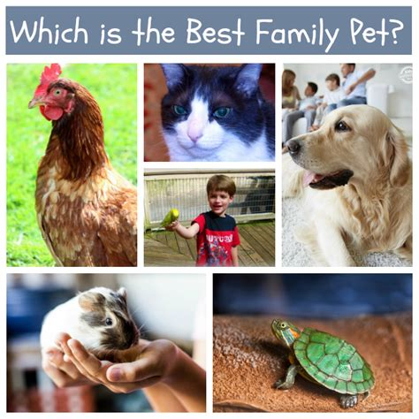 best dogs for families best pets for families with