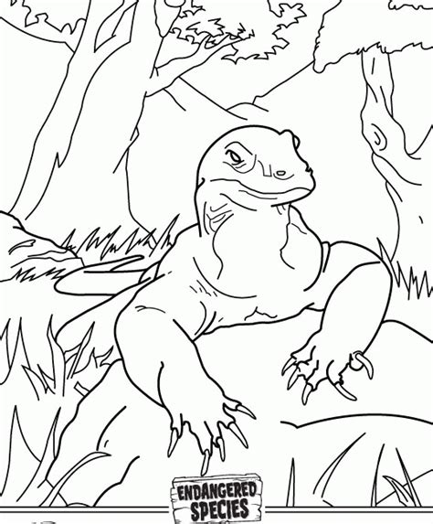 coloring pages komodo komodo coloring pages coloring home