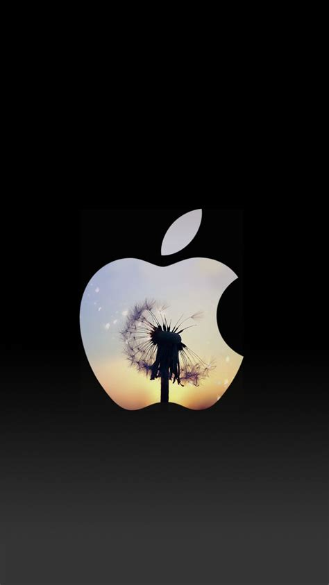 dandelion sunset apple logo iphone  lock screen wallpaper