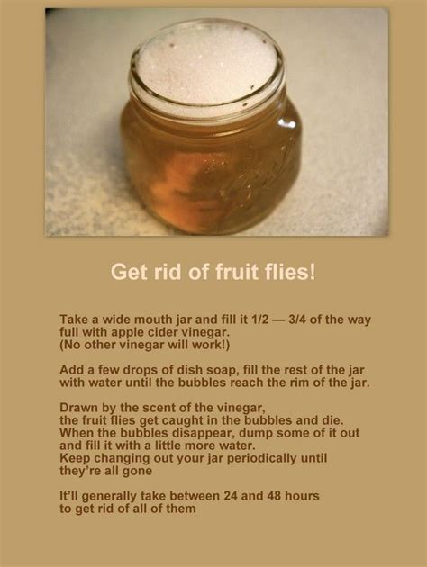 how to get rid of fruit flies in the house how to get rid of fruit flies cleaning tips pinterest