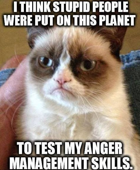 Funny Stupid People Memes - grumpy cat and stupid people grumpy cat grumpy cat