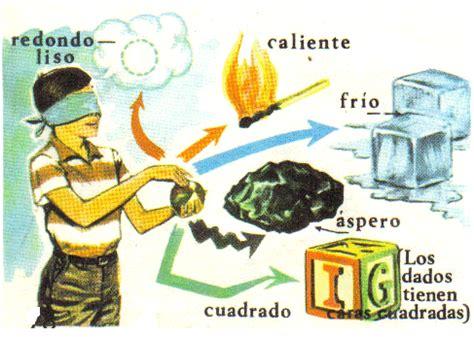 imagenes sensoriales tactiles ejemplos que es el tacto para ni 241 os imagui