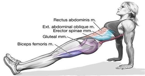 plank exercise diagram do plank to tighten your and lower