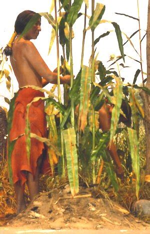 iroquois uses of maize and other food plants classic reprint books the three activities