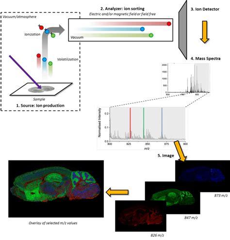 maldi tof imaging mass spectrometry in clinical pathology