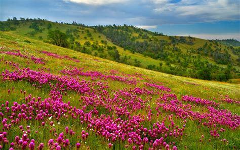 image gallery meadow landscape