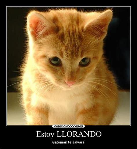 imagenes de gatitos llorando gatito llorando imagui